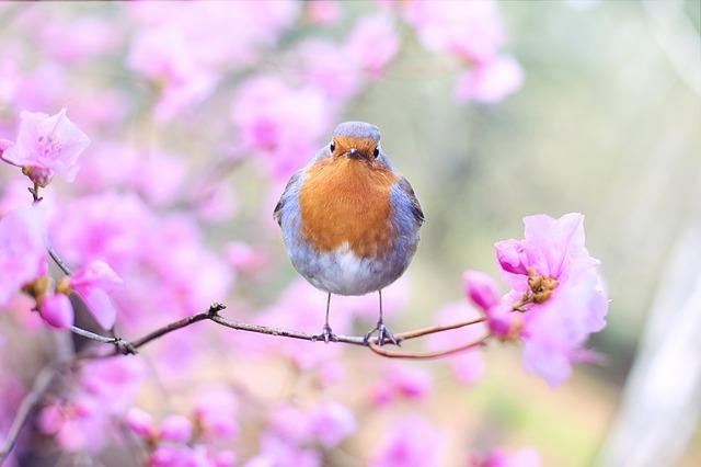 ptáček.jpg